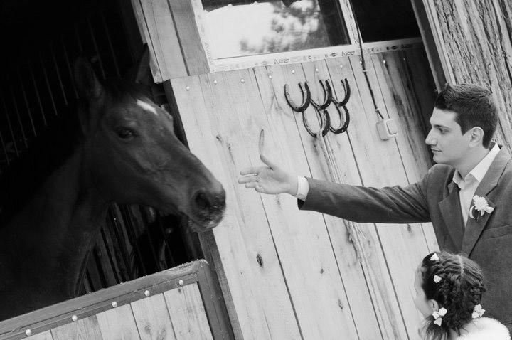Veterinarian Horse