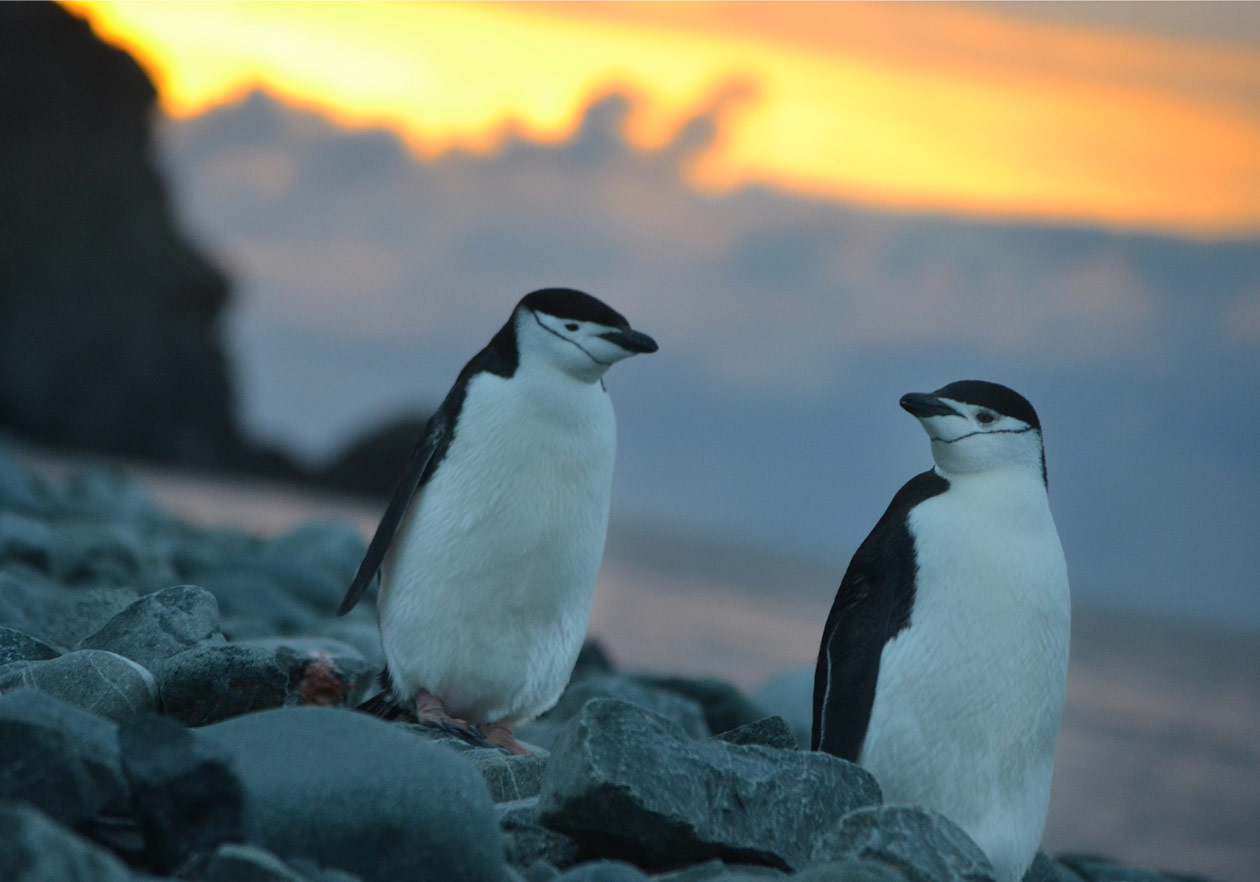 אנטארקטיקה פינגווינים